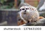 wildlife and animal portraits | Shutterstock . vector #1378631003