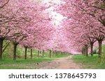 cherry blossom in berlin ... | Shutterstock . vector #1378645793