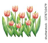 watercolor tulips  hand drawn... | Shutterstock . vector #1378710479