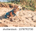 chihuahua wearing sunglasses...   Shutterstock . vector #1378792730