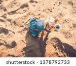 chihuahua wearing sunglasses...   Shutterstock . vector #1378792733