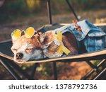 chihuahua wearing sunglasses...   Shutterstock . vector #1378792736