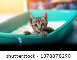 Cute Little Cat In The Sandbox