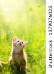 happy playing cat on green... | Shutterstock . vector #1379076023