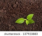 Seedling Green Plant Surface...