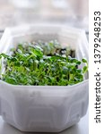 different types of microgreens. ...   Shutterstock . vector #1379248253