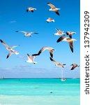 Sea Gulls Fly Over The Sea ...