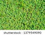 green leaves background | Shutterstock . vector #1379549090