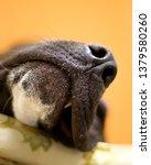 close up photograph of a black...   Shutterstock . vector #1379580260
