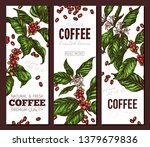 vector coffee plants and tree... | Shutterstock .eps vector #1379679836
