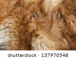 Dog Fur Close Up. Red  Yellow ...