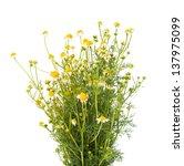 medical chamomile on white...   Shutterstock . vector #137975099