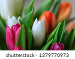 tulip flower close up  with... | Shutterstock . vector #1379770973