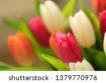 tulip flower close up  with... | Shutterstock . vector #1379770976
