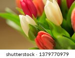 tulip flower close up  with... | Shutterstock . vector #1379770979