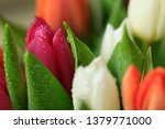 tulip flower close up  with... | Shutterstock . vector #1379771000