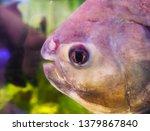 bright tropical fish swim in... | Shutterstock . vector #1379867840