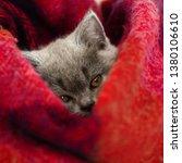 Stock photo gray kitten sleeps in a bright wool blanket 1380106610