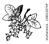 urrant. hand drawn vector... | Shutterstock .eps vector #1380120749