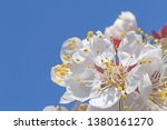 close up of apricot tree... | Shutterstock . vector #1380161270
