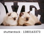 Stock photo scottish straight and scottish fold kittens background with kittens ready for your design 1380163373