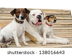 Stock photo two jack russel terriers and american bulldog lying on a bench 138016643