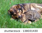 Stock photo cat and dog relaxing on the grass 138031430