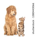 Stock photo cat and dog look at each other isolated on white background 1380443066