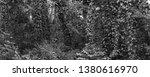 vegetation virgin of the... | Shutterstock . vector #1380616970
