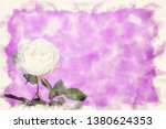 close up of white rose on a... | Shutterstock . vector #1380624353