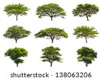 Collection Of Rain Trees ...