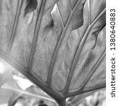 vegetation virgin of the... | Shutterstock . vector #1380640883