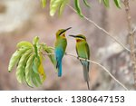 pair of blue tailed bee eater ... | Shutterstock . vector #1380647153