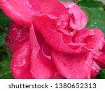 flower spring nature | Shutterstock . vector #1380652313