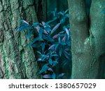 vegetation virgin of the... | Shutterstock . vector #1380657029