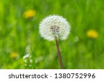 close up of blowball in green... | Shutterstock . vector #1380752996