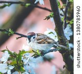 square photo with male sparrow... | Shutterstock . vector #1380785960