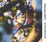 square photo with male sparrow... | Shutterstock . vector #1380785966