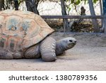 Stock photo an aldraba tortoise in captivity the aldabra giant tortoise from the islands of the aldabra 1380789356