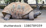 Stock photo an aldraba tortoise in captivity the aldabra giant tortoise from the islands of the aldabra 1380789359