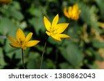 close up of little yellow... | Shutterstock . vector #1380862043
