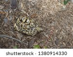 Stock photo african leopard tortoise george c mcgough nature park the african spurred tortoise also called 1380914330