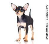 Stock photo adorable little black puppy 138093599