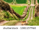 Stock photo roxburgh kelso scottish borders uk th march a european hare also known as the brown 1381157960