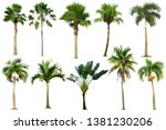 Tree Collection Palm Tree Isolated - Fine Art prints