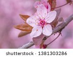 close up of pink cherry tree... | Shutterstock . vector #1381303286
