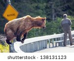 Brown Bear Near Unsuspecting Man