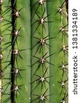 close up of big cactus exotic...   Shutterstock . vector #1381334189