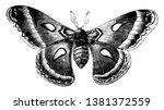 cecropia moth has large wings ... | Shutterstock .eps vector #1381372559
