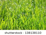 morning dew on fresh green... | Shutterstock . vector #138138110